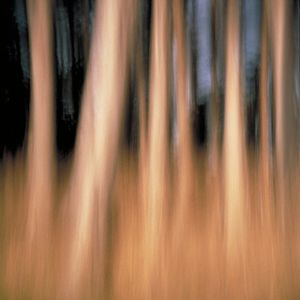 Cypress 2 (vibrations) © Alfred Tom