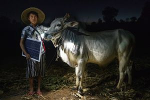 Mg Ko, 20 years old. A Shan farmer with his cow in Lui Pan Sone Village. Kayah State.
