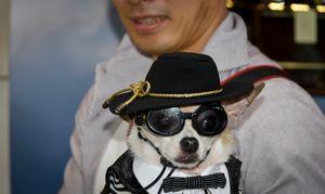 Ginza Dog