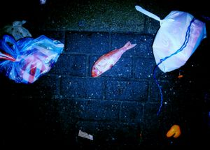 Dead Fish On The Street