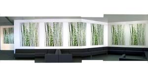 Horsetail Equisetum,