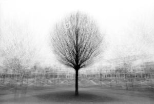 stadtbaum#6