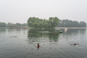 The Swimmer, Beijing, China.