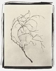 Botanical Specimen with Salt (Branch No. 3)© Claire A. Warden
