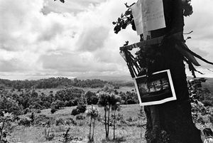 A tree marked with ribbons and posters overlooks the site of the Comalapa exhumation. One foreign journalist commented on how hard it is to believe that such horrible things could happen in such beautiful country. © Victor Blue, 2004