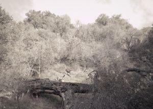 Deer, Road to Hope
