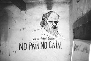 """""""No pain no gain"""""""
