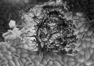 Garry Oak Stomata Clouds