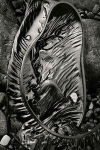 Seaweed 150, Seawall, Maine © Alan Henriksen