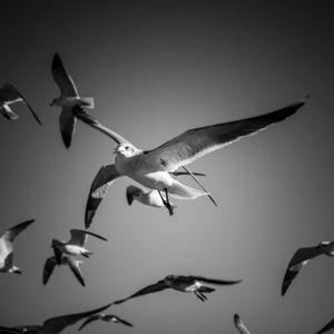 Texas City Dike - Gulls