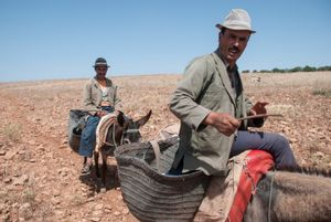 The Wheat Farmers. Asilal, Morocco