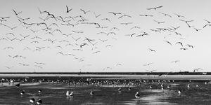 Texas City Dike - Gulls Away