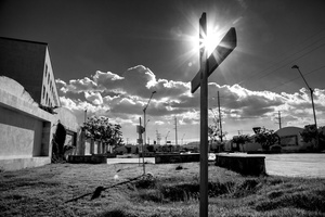 The Cotton Field