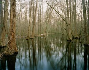 Snuffy in Salkehatchie Swamp, Broxton Bridge Road                                       © Eliot Dudik