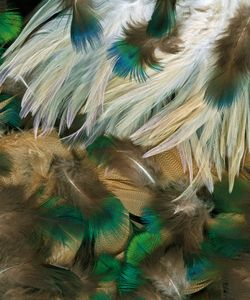 © Jennifer Formica, Cockerel Plumage, 2012