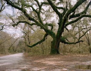 Hangin Tree, Jackass Road                                 © Eliot Dudik
