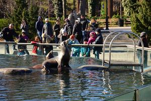 Seals, Central Park Zoo