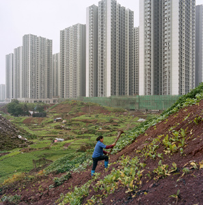Urban farmer in Jiangbei