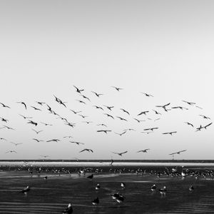 Texas City Dike - Flock of Gulls