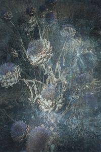 Untitled(Artichoke)
