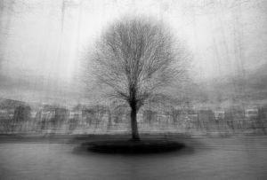 stadtbaum#16