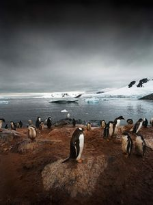 Gentoo Rookery, Series: Antarctica: The Global Warning, 2006, Petermann Island, Antarctica © Sebastian Copeland, courtesy of Prix Pictet 2008