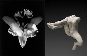 (left) Orchid, 1985 © Robert Mapplethorpe Foundation. Used by permission. (right) Iris messagere des dieux, vers 1891-1893 © Paris, musee Rodin