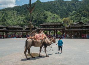 The Camel, Xijiang, Guizhou, China.