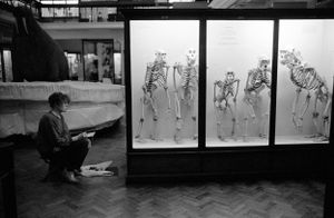 The Natural History Galleries of the Horniman Museum in London. United Kingdom. 1993.
