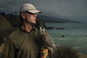 A falconer and his bird keep the Palos Verdes, CA skies clear of other birds