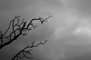 Clouds and Manzanita Branches