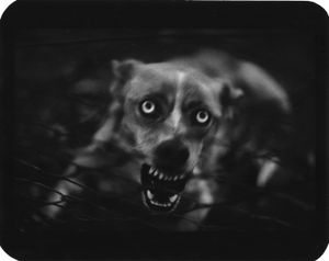Untitled, from the series, The Animals,  © Giacomo Brunelli