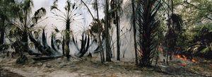 Fire in the swamp #2 © Karen Glaser 2007