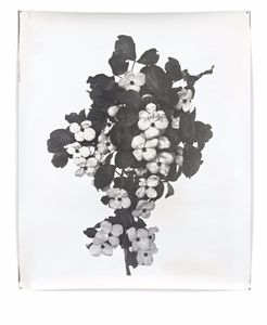 Nature Morte 18 - 2/6, 2012. Showing at Galerie Seine 51. Courtesy Art Paris Art Fair.