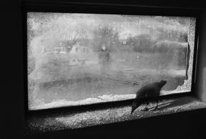 Through the Glass Darkly © Lisa Folino