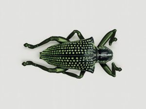 WEEVIL [Entimus jumpis] Highly-adaptable jumping insect