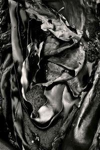Seaweed 436, Seawall, Maine © Alan Henriksen