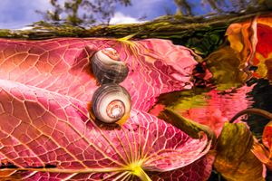 Water plants and snail at Dos Ojos