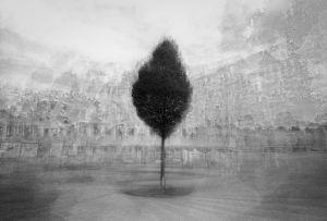 stadtbaum#17