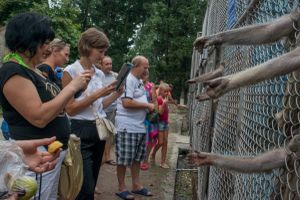 Georgia, Sukhumi, Abkhazia Tourists view and photograph monkeys in cages at the Institute of Experimental Pathology and Therapy in Sukhumi. The centre was the first place to conduct primate testing in the world. Today the run down institute mainly serves as a makeshift zoo for tourists.© Petrut Calinescu