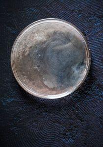 Petri Nebula 553.2