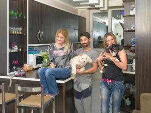 Dog Owners (III)