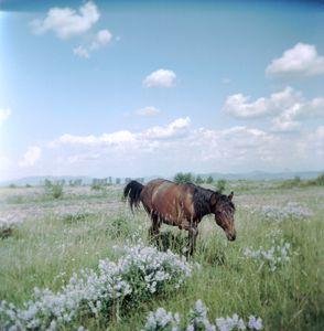 Horse (Kökényesd, Romania, 2006)