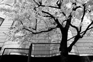 Tokyo blur #10
