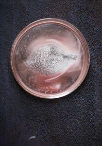 Petri Nebula 497.3