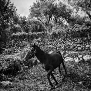 A horse runs near the coast of Lesbos, Greece. Just a few meters away, hundreds of refugees are arriving on the beaches.