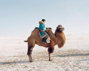 Camel rider,2010