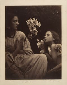 A Study (After Perugino) by Julia Margaret Cameron, 1865-66The Metropolitan Museum of Art, New York. Bequest of James David Nelson, in memory of Samuel J. Wagstaff Jr., 1988. Inv. 1990.1074.3