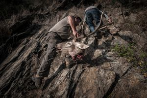 José Pinguelo climbing the escarpment with the head of a deer. © Antonio Pedrosa