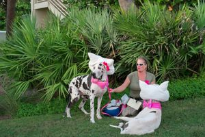 The Hello Kitty Great Danes, Casa Marina, Key West, Florida. © Rona Chang